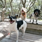 Sandy Oaks Kennels and Daycare - Rockport, TX