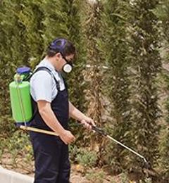 Masters Termite & Pest Control - Milton, DE