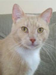 Positive Paws Pet Services, LLC