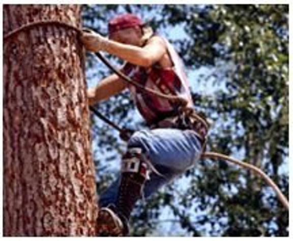 Sherman Oaks Tree Service - Sherman Oaks, CA