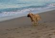 Village Veterinary - Tequesta, FL. Doing what she loves