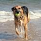 Canines 4 Hope Dog Training - Stuart, FL