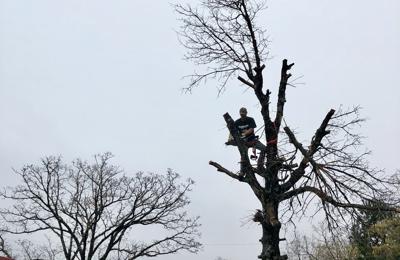 Out On A Limb Tree Service Norman, OK 73026 - YP.com