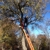 Steve's Lawn Care & Tree Service