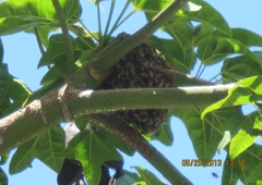 Bee Best Bee Removal - La Mesa, CA