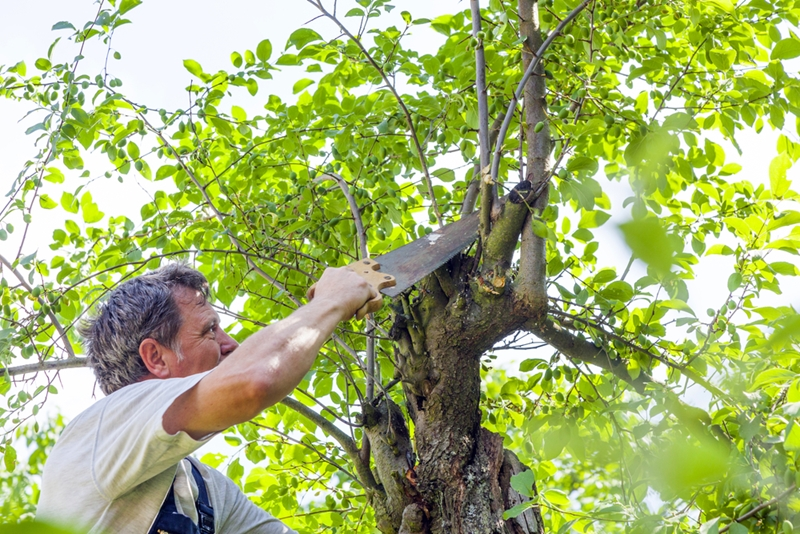 How to get affordable tree service yellowpages get a good price on tree removal services by having your trees cut during the winter solutioingenieria Image collections