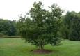 Atlas Tree, Inc. - Hamilton, VA
