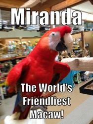 Kookaburra Bird Shop, LLC