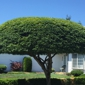 Pacific Tree Service - Kent, WA