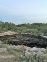 Don't forget to take the bat tour at Devil's Sinkhole