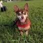 Miami Pet Emergency - Miami, FL. Zeus