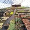 Desert to Tropics Nursery