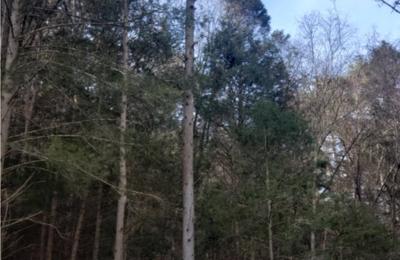 Saar's Tree Service, LLC - Lock Haven, PA