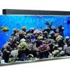 CCA - Aquarium Supplies Online