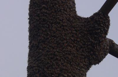 Escondido crochet indien datant de Doha
