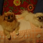 Dapper Dogs Grooming Studio - Tallahassee, FL