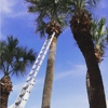 Subtropic Tree Care and Removal LLC