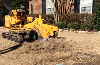 Economy Stump Removal - Birmingham, AL