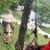 Clear cut tree service