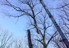 Angry Al's Tree Service 100 Pathfinder Dr, Middletown, PA