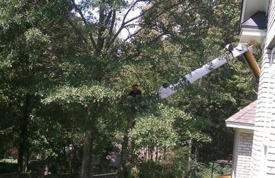 Mister D's Tree Cutting & Stump Grinding Service - Prattville, AL