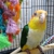 Tweety Bird Aviary