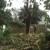 Michoacan Property Maintenance, LLC.