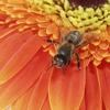 Little Giant Beekeepers