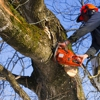 Johnson's Tree Service & Stump Grinding