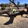 Techer's Tree Service