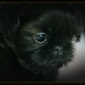 Deans Pet Shop - Louisville, KY