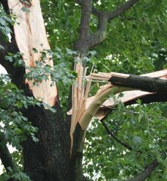 Helmuth Tree Service