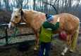Horsefaire - Glastonbury, CT. Horse care is always included in our lesson time!