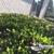 Precision Care Lawn & Landscaping Inc.