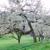 Essner Tree Service