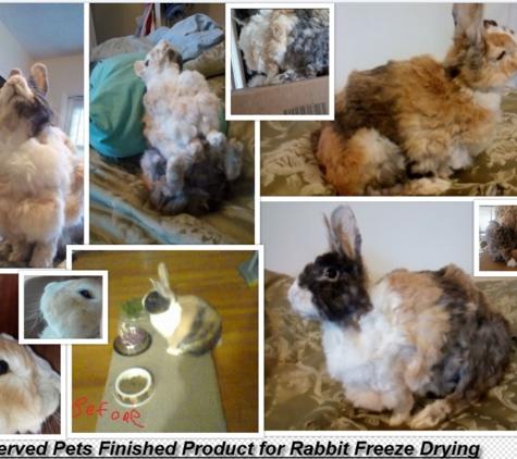 Preserved Pets. Collage of Destruction.