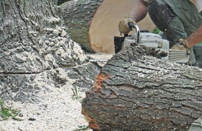 Chop Chop Tree - Kissimmee, FL