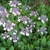 Irvington Landscape Inc./Plant Health Concepts LLC
