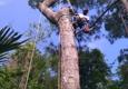 Above All Else Tree Service - Kingsland, GA