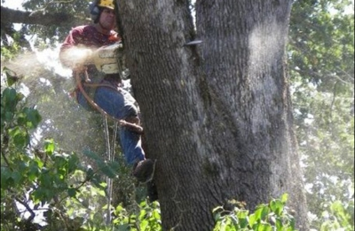 Falcon Tree Experts - Keizer, OR