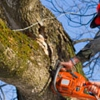 Towle Hill Tree & Timber Service