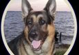 VomWeiland German Shepherd puppies North Carolina - Bath, NC