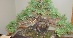 Ron Anderson Bonsai - santa cruz, CA