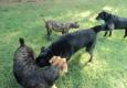 Chenal Pet Palace - Little Rock, AR