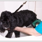 Perfect Paws Pet Salon - Plymouth, MI