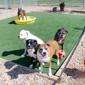 Birch Hill Kennels - Northfield, NH. Doggie Day Care in Northfield, NH