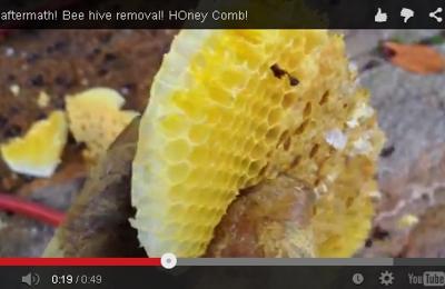 Miami Bee Removal Corp. - Miami, FL