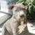 ANIMAL FRIENDS PROFESSIONAL PET CARE- PET SITTER & DOG WALKER