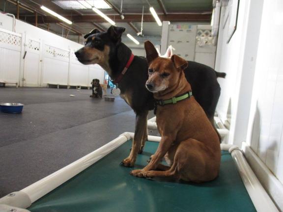 WagVille - Los Angeles, CA. dog grooming in los angeles, ca