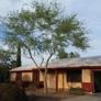 TDR Tree Services - Mesa, AZ. Sissoo Tree After Trimming in Mesa Arizona